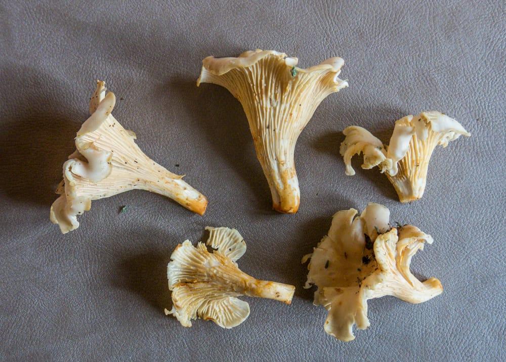 White Chanterelle Mushrooms France
