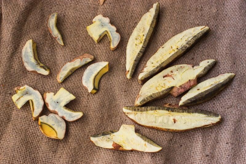 bicolor boletes, edible, minnesota
