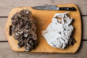 Cutting steaks from a hen of the woods mushroom, maitake, or Grifola frondosa