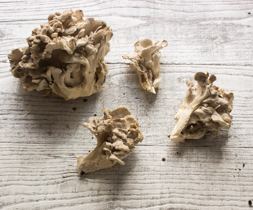 white hen of the woods mushroom