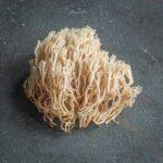 clavacorona pyyxidata coral mushroom