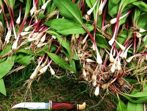 Ramps/Ramsons/Wild Garlic/Wild Leeks
