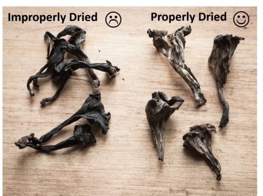 dried mushrooms, correct way