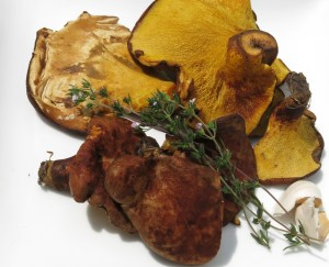 Ash Tree Boletes or Boletinellus Mushrooms