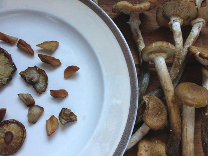 honey mushrooms wild minnesta mushrooms pidpenky