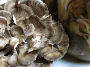 Pickled Hen Of The Woods Mushrooms/Maitake