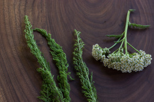 Cooking With Yarrow?