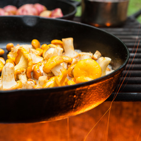 chanterelles cooking on a campfire
