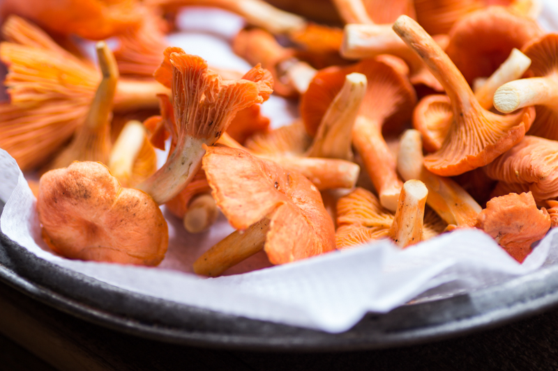 red chanterelles from wisconsin