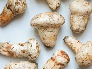 Matsutake/Pine Mushroom