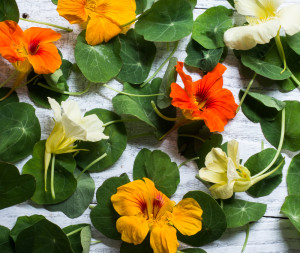 Nasturtium leaves and flowers