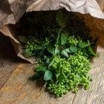 Green Zanthoxylum-wild Szechuan Peppercorns prickly ash berries