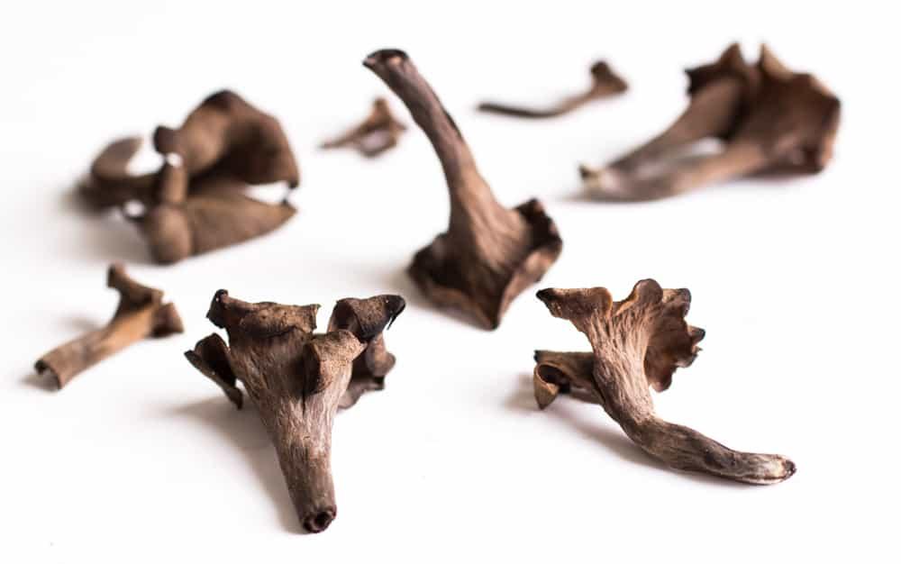 Black trumpet mushrooms MN 2015-4