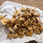 fairy ring mushrooms, marasmius oreades