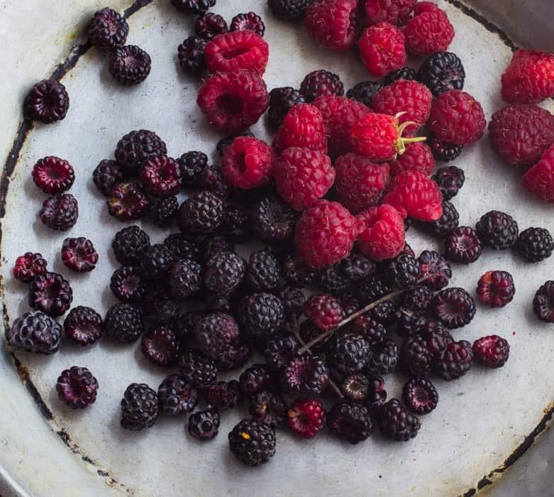 Wild blackcap raspberry
