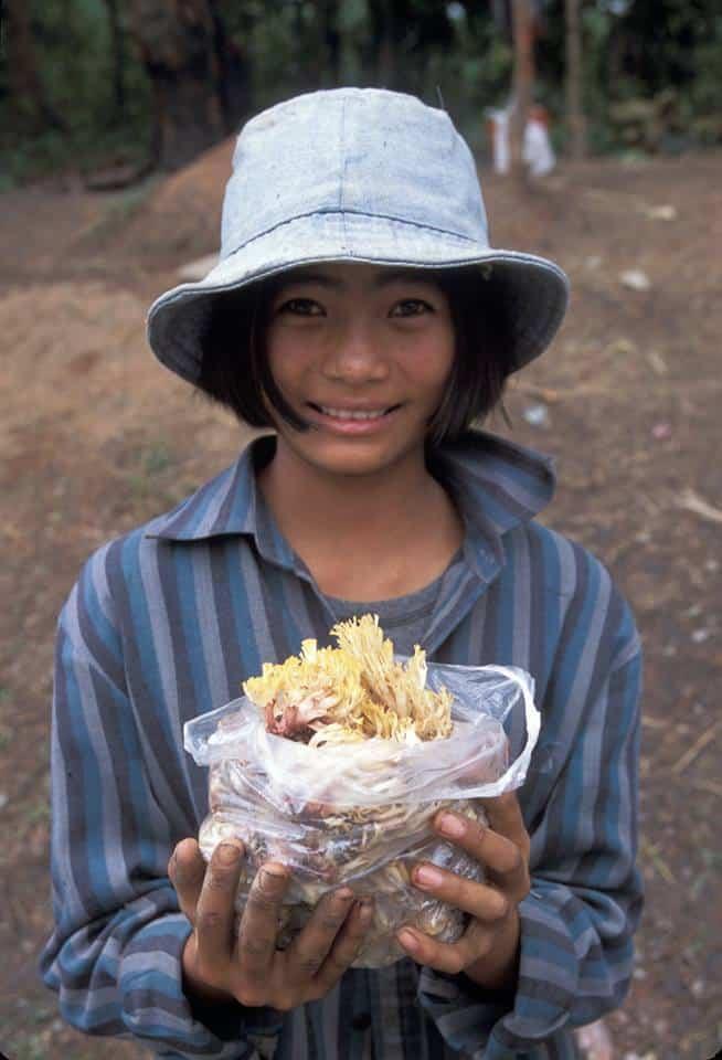 ramaria, coral mushrooms,