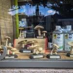 Pharmacy mushrooms
