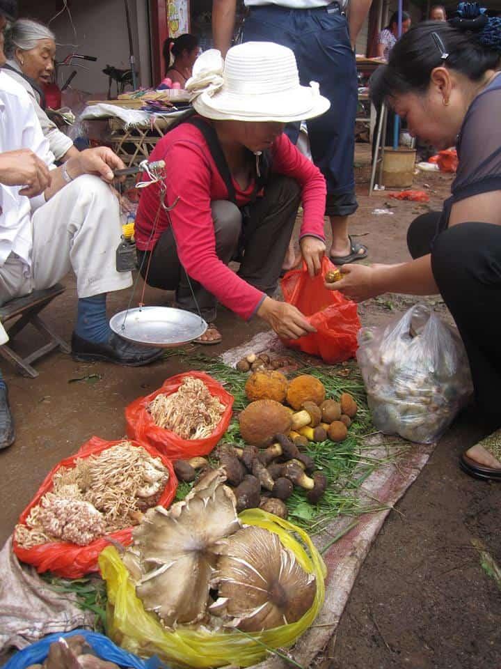 ramaria, coral mushroom,