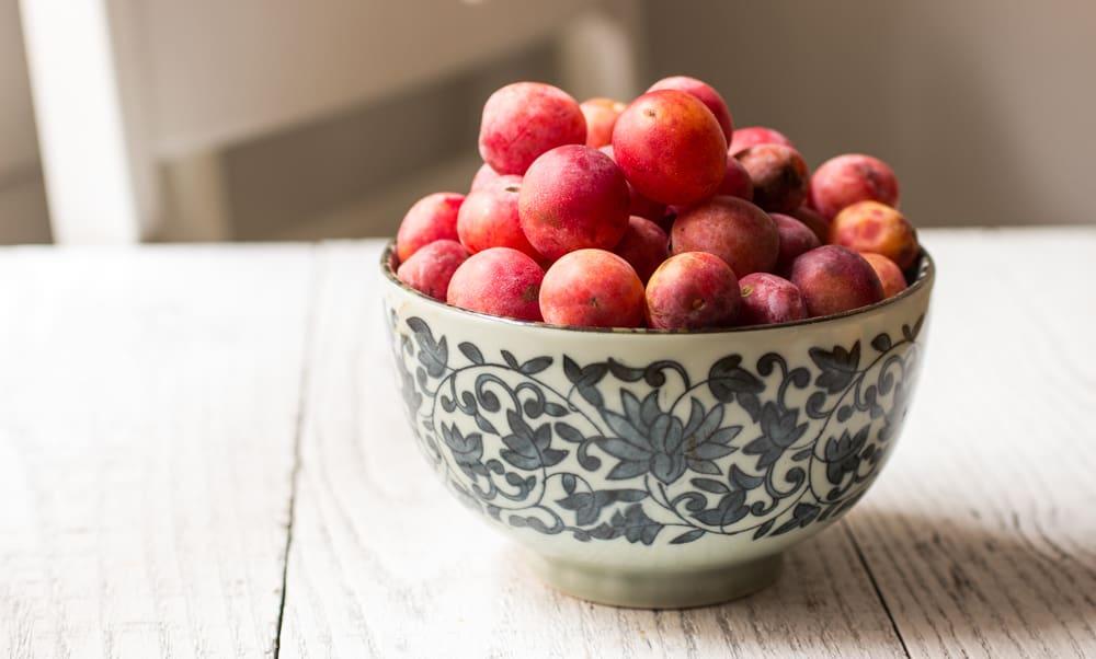 wild plums, wild, plum,