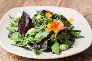 Dotty's Wild Green Salad