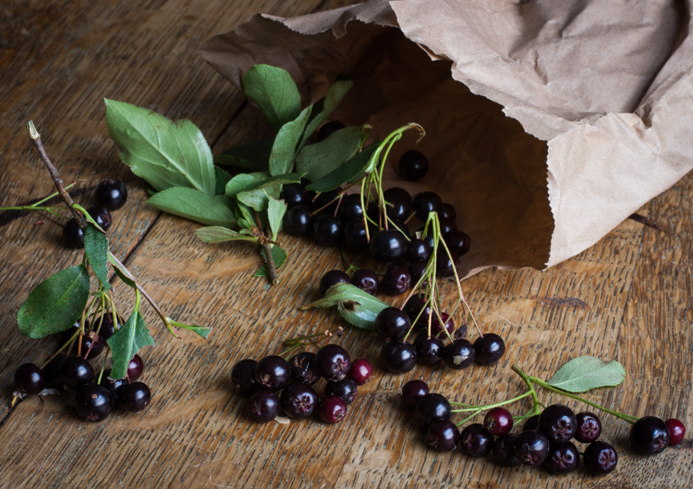 chokeberry-or-aronia-berry_