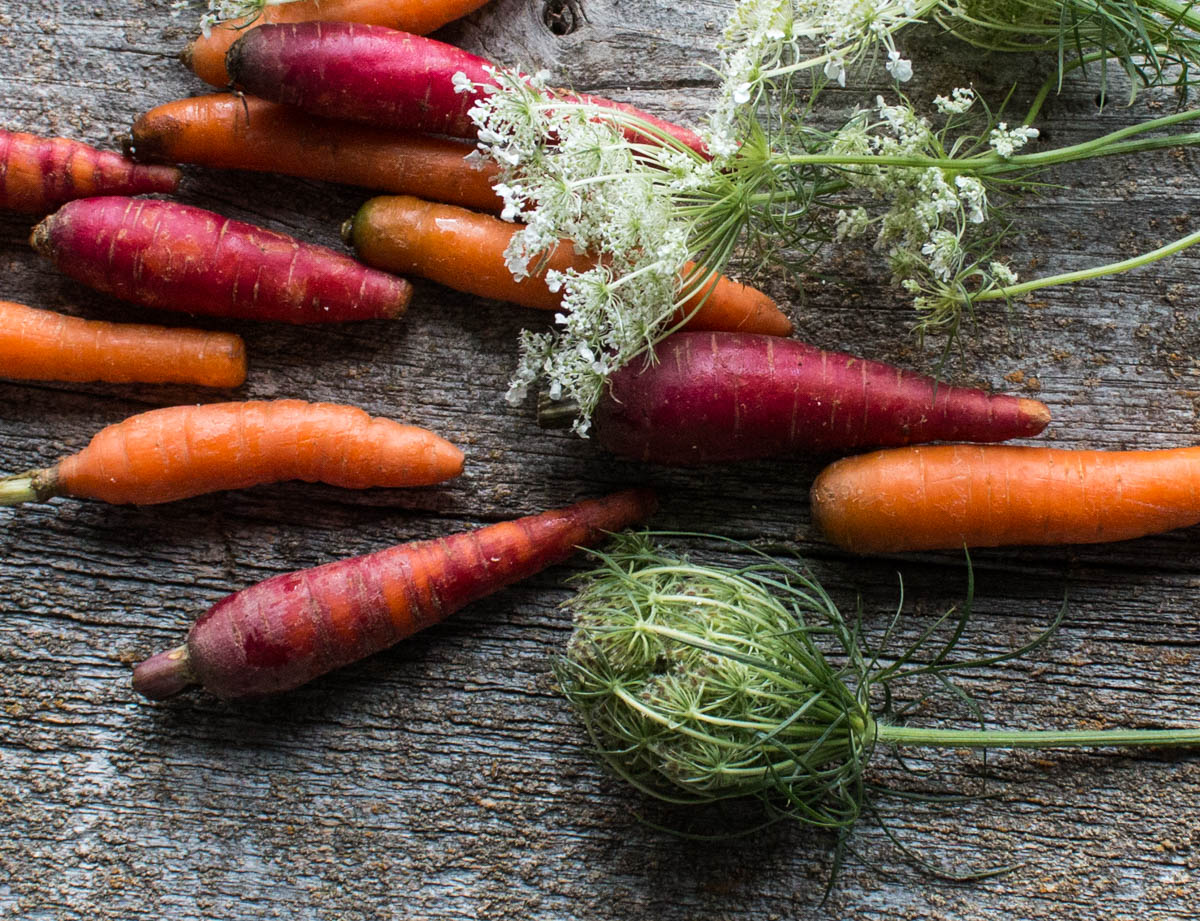 heirloom carrots and carrot flowers