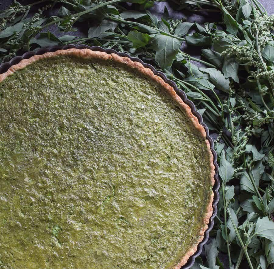 Lamb's Quarters, Chenopodium or Wild Spinach tart