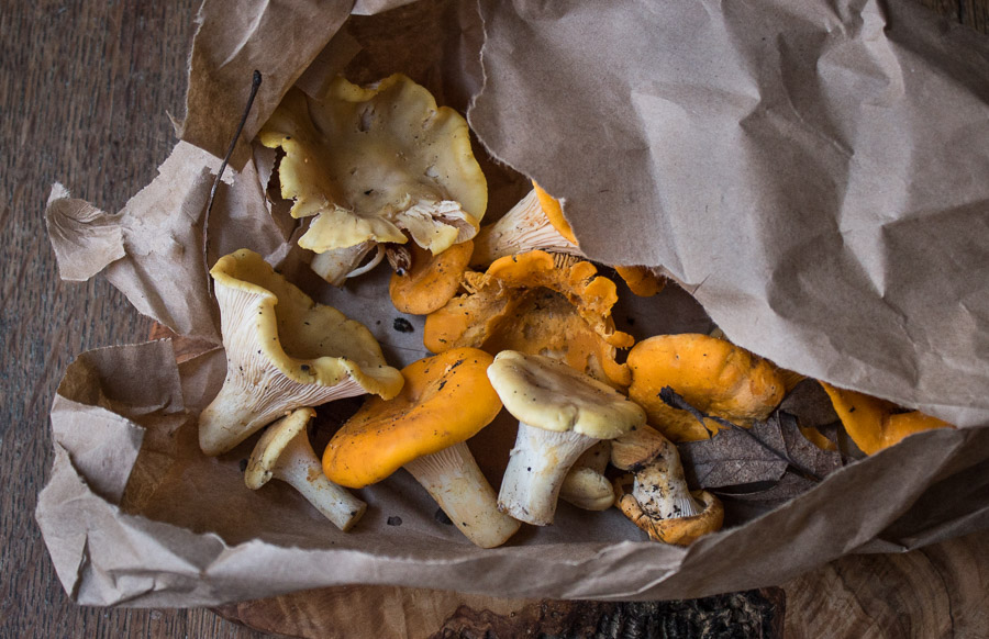Gold and white chanterelle mushrooms