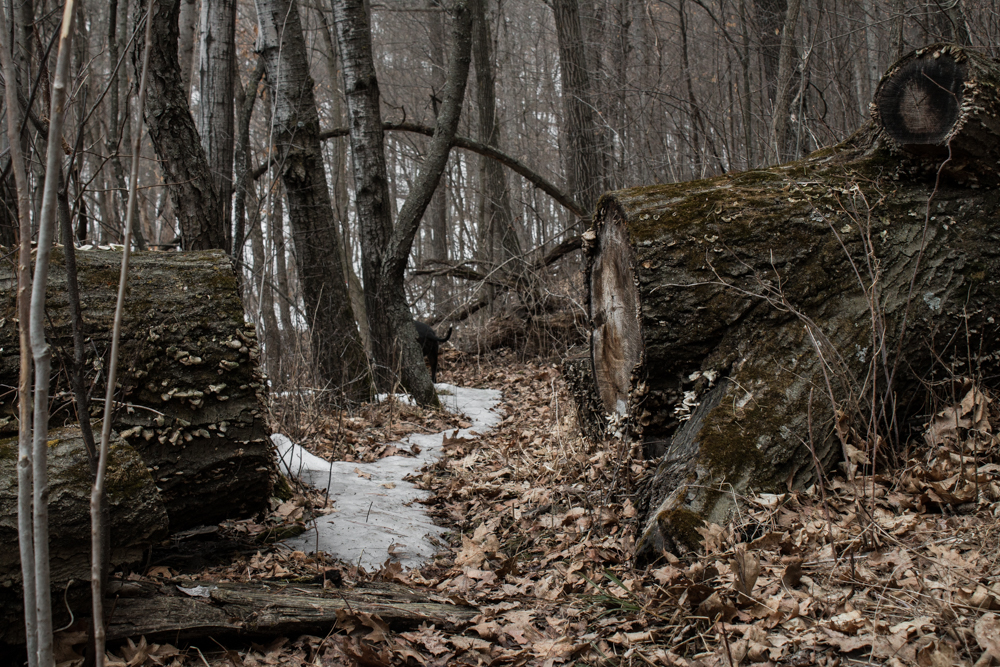 Thaw Season, foraging in Wisconsin and Minnesota