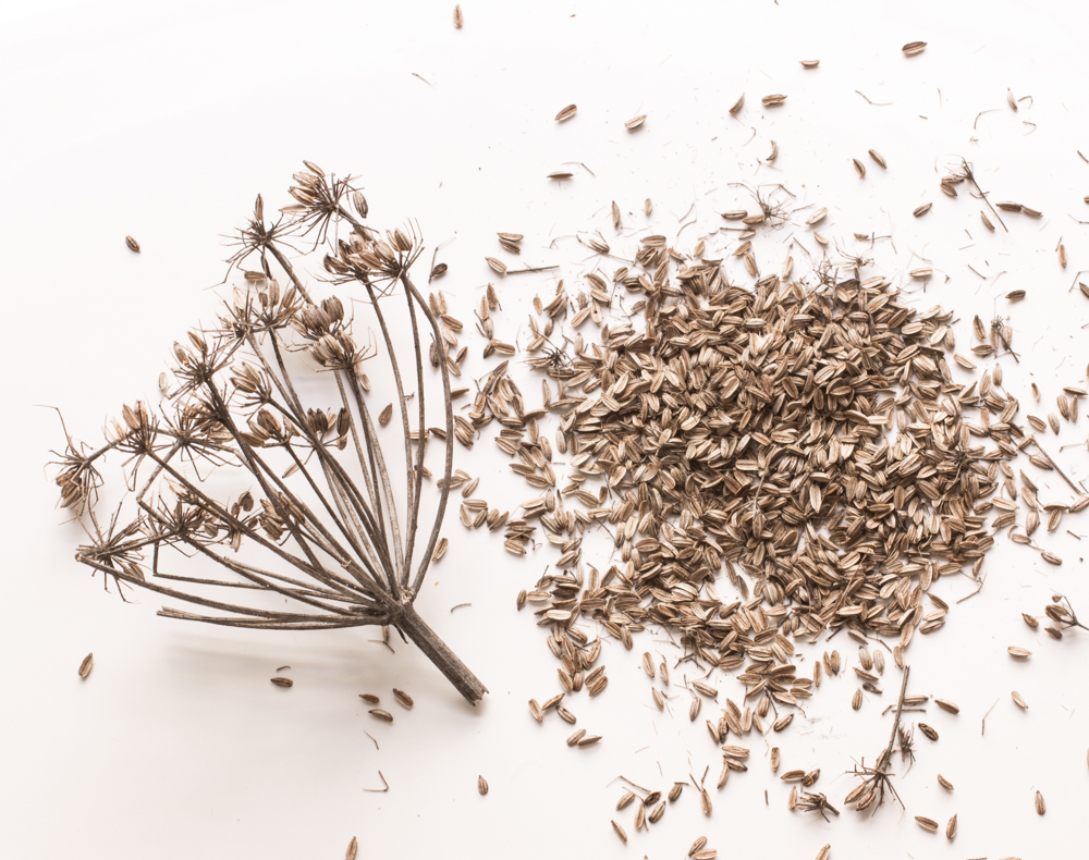 Wild Fennel Seed