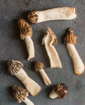half-free morels morchella punctipes