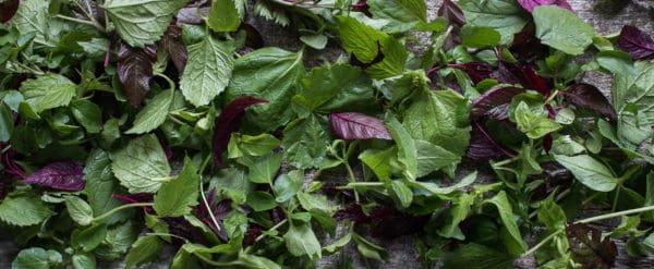 foraged green salad