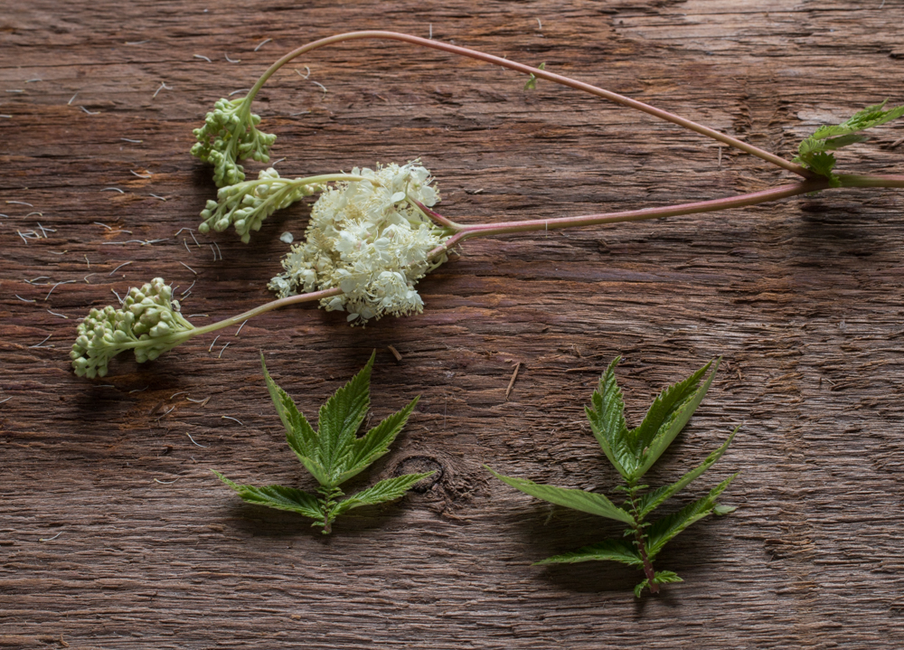 Foraged meadowsweet flowers from Minnesota