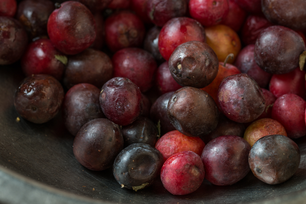 Overripe wild plums for vinegar