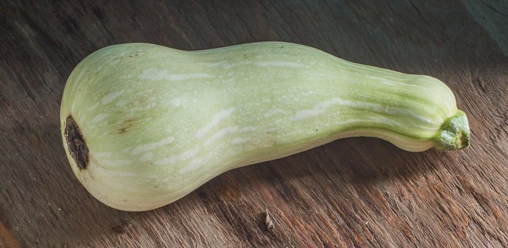 Unripe, edible butternut squash
