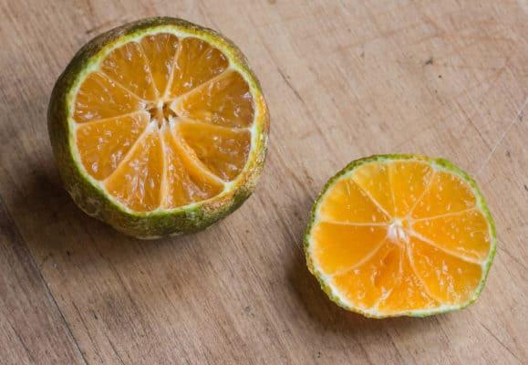 limon mandarina