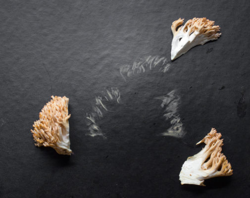How to spore print a mushroom