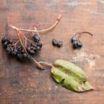 Nannyberries or Viburnum lentago