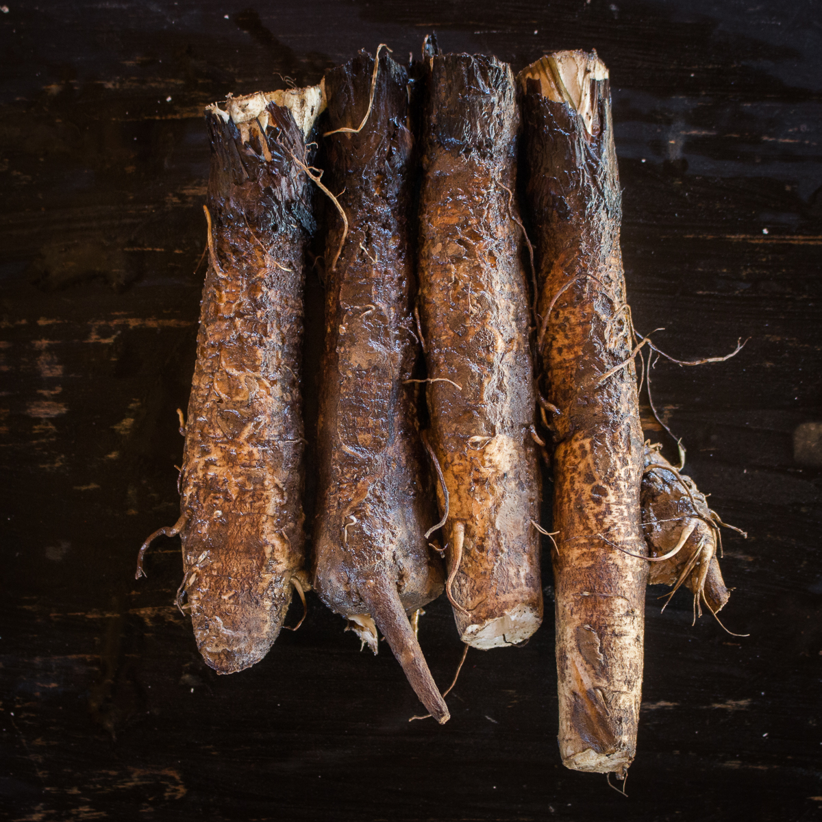 Foraged burdock root