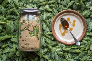 Traditional spruce tip syrup recipe
