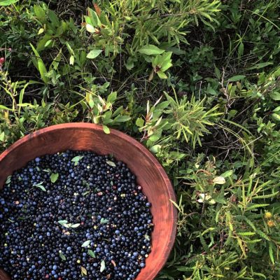 A very large bowl of wild blueberries