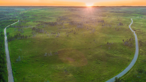 The jack pine barrens, image by Jesse Roesler.
