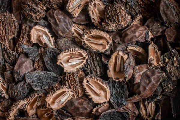 Cracked butternut shells